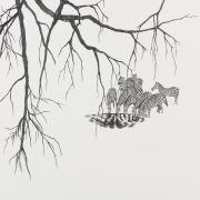 """Zeichnung """"Zebras"""" von Uta Siebert"""
