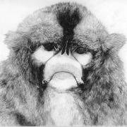 Zeichnung Affe (Peripherie)