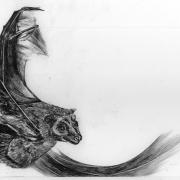Zeichnung Fledermaus (Peripherie)