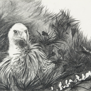 Zeichnung Nest (Peripherie)